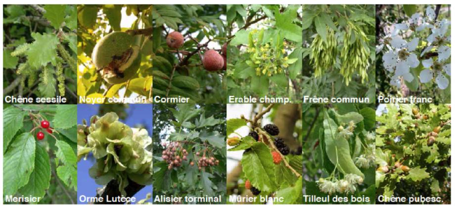 OSez l'Agro Écologie : Agroforesterie